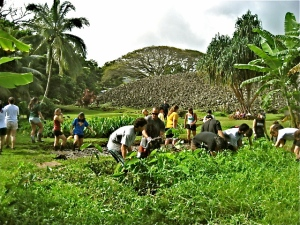 Volunteers work in the lo'i kalo at Ulupo Heiau